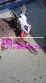 070423_hitoiki_1